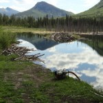 Beaver Dam at Reflection Lake