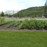 Gardens at Toad River Lodge